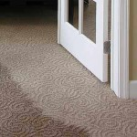 Expert carpet cleaners for all types of water damage